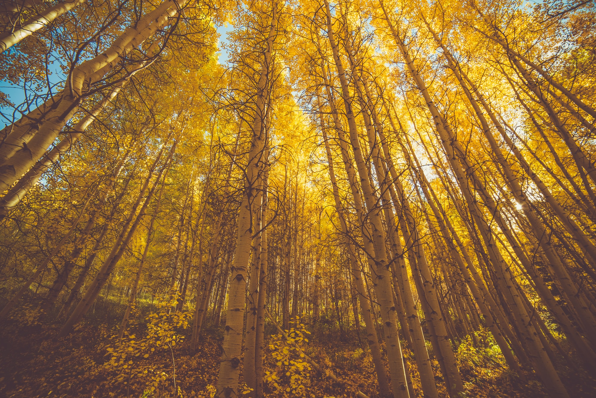 Fire bærekraftige fond [og en portefølje] du kan investere i