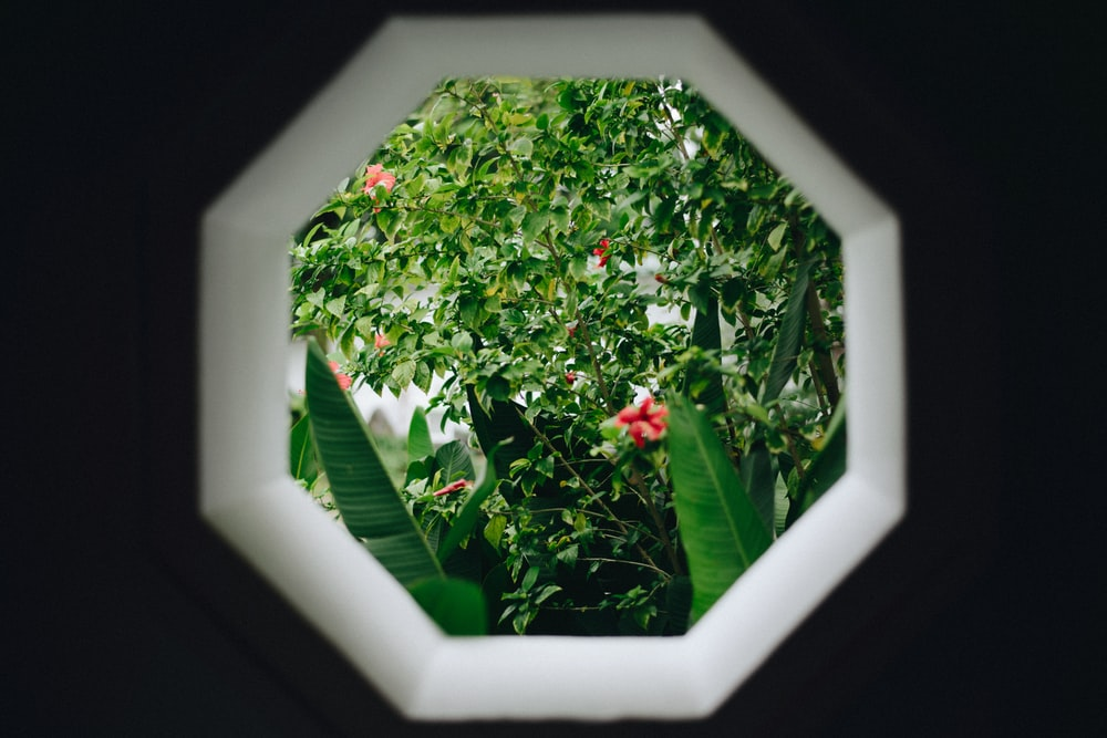 through photo of window with green leafed plant view