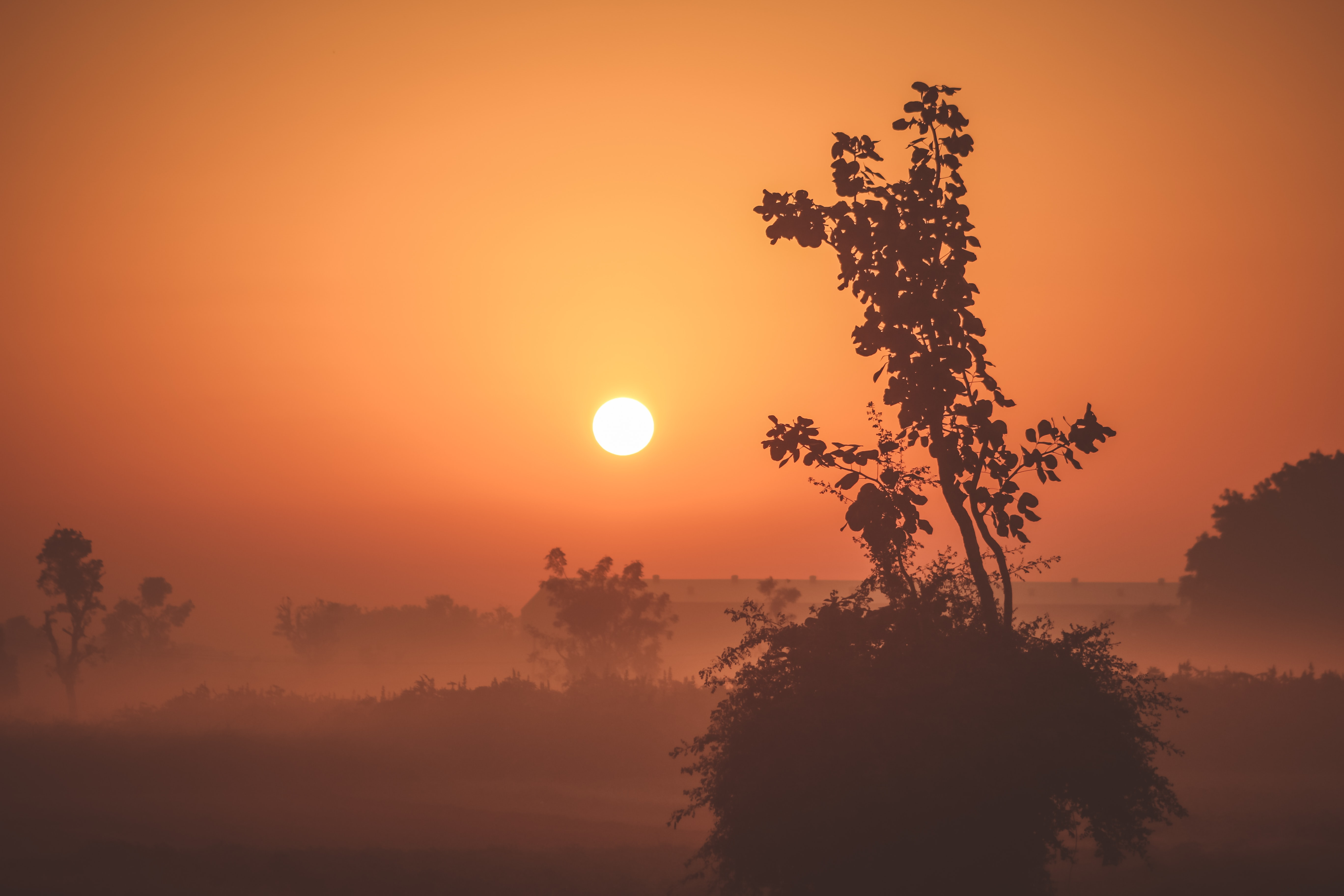Silhouette lowland bush and tree landscape at sunrise-or-sunset and a bright orange sky