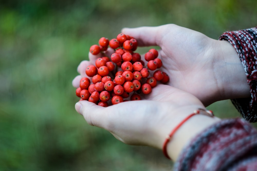 cluster of red fruits on person's hand
