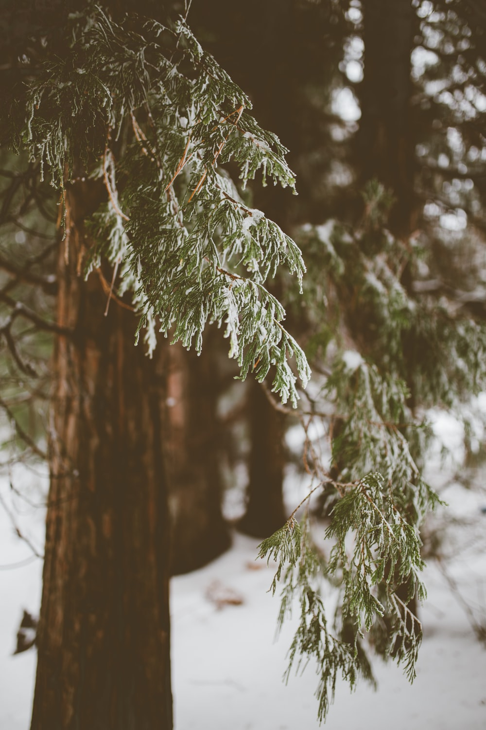 shallow focus photography of green trees during winter