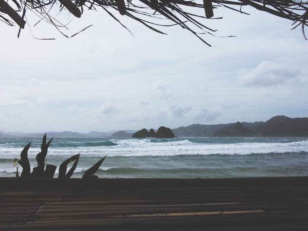 seashore on focus photography
