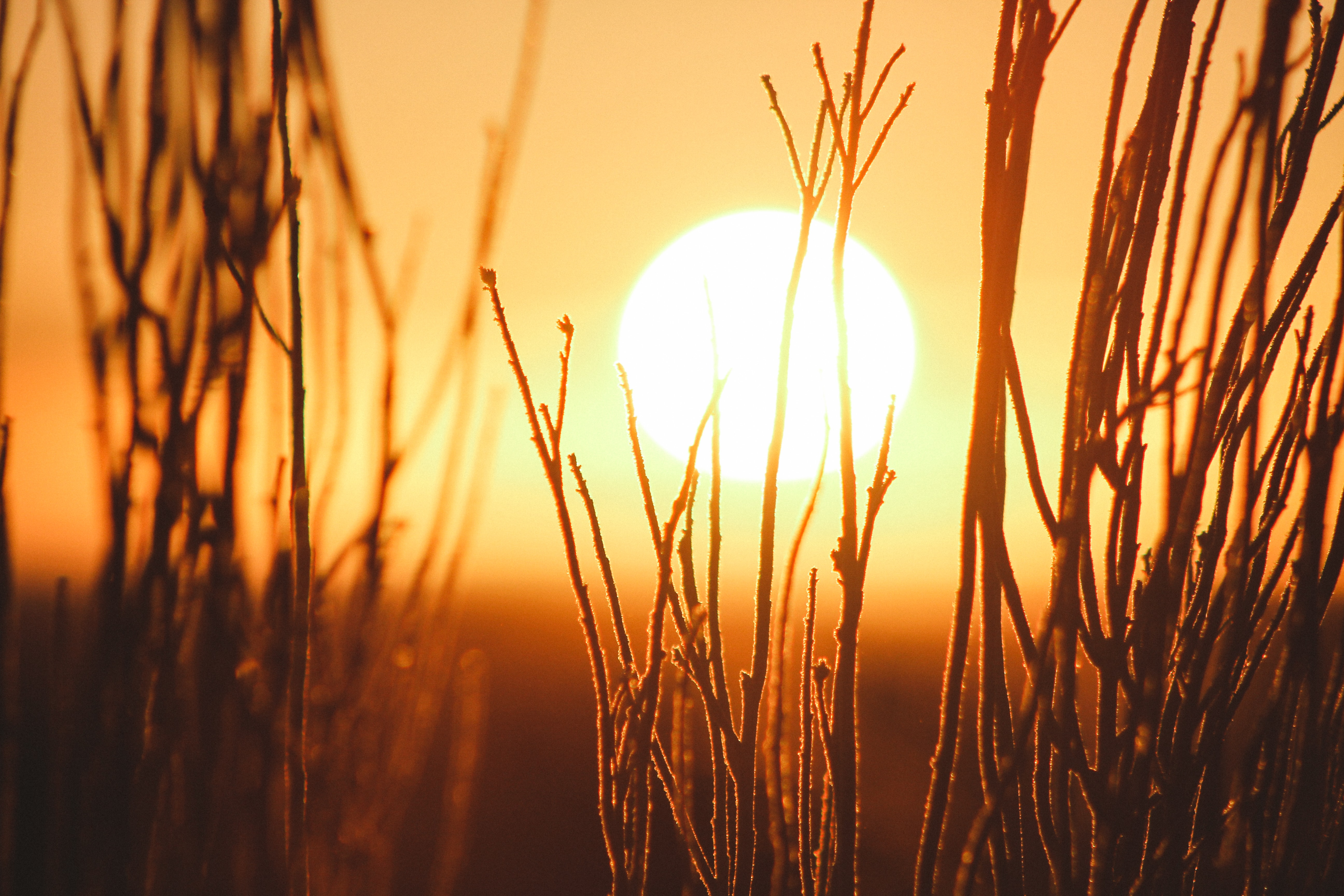 shallow focus photography of grains with sun