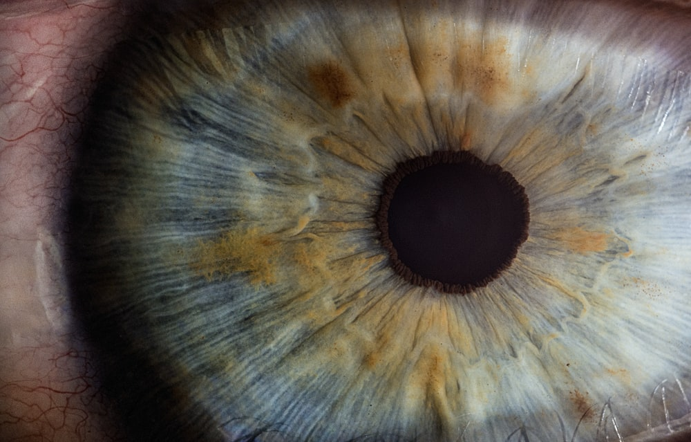 macro photography of human eye