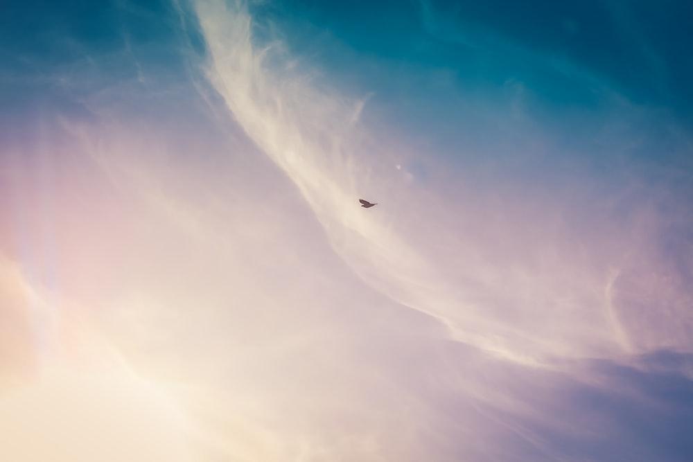 black bird flying on the sky