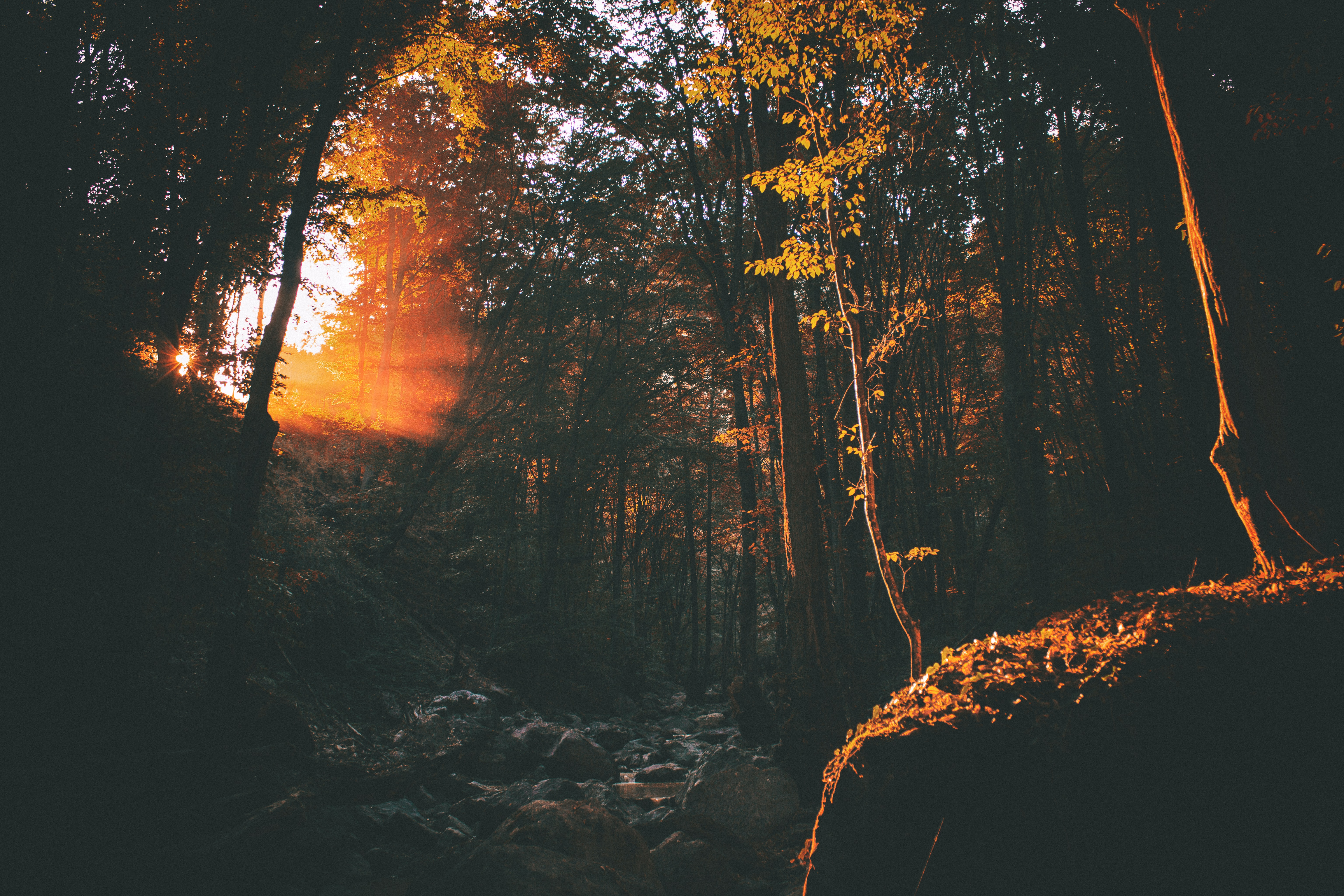Warm sunlight breaks into the autumn forest through an opening in the canopy