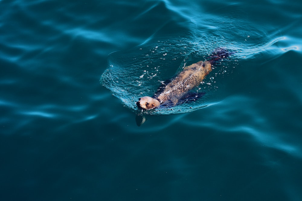 photo of brown and black animal swimming at body of water
