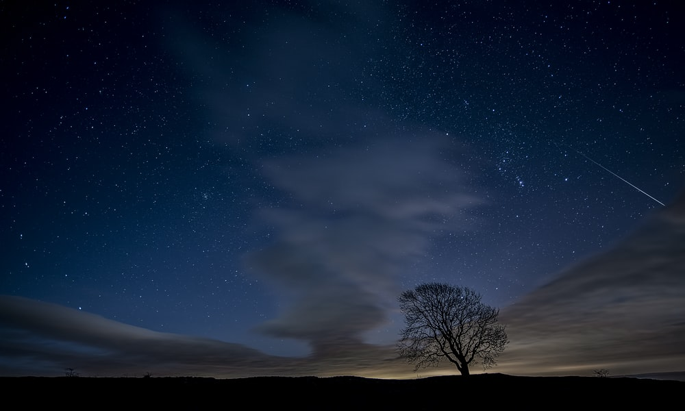 silhouette photo of trees during nighttime