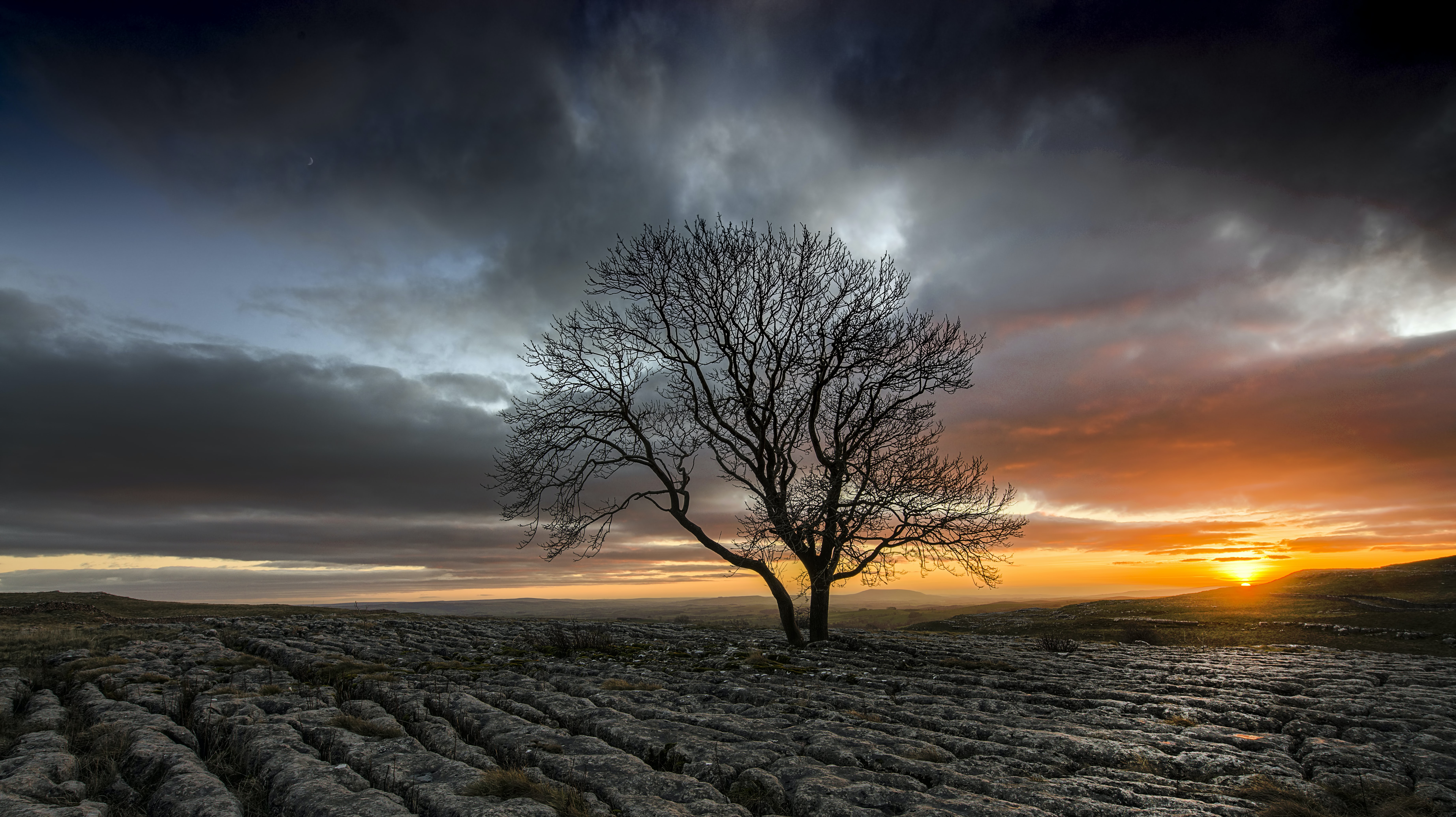 A solitary, bare tree in a desolate field, with the clouds and sunset in the distance