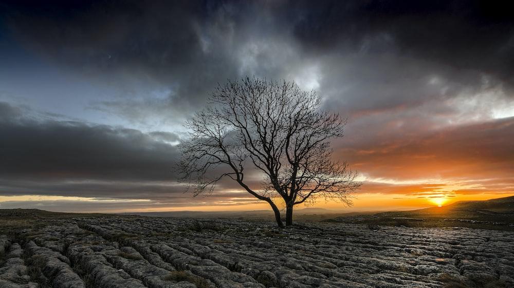 bare tree under gray cloudy sky