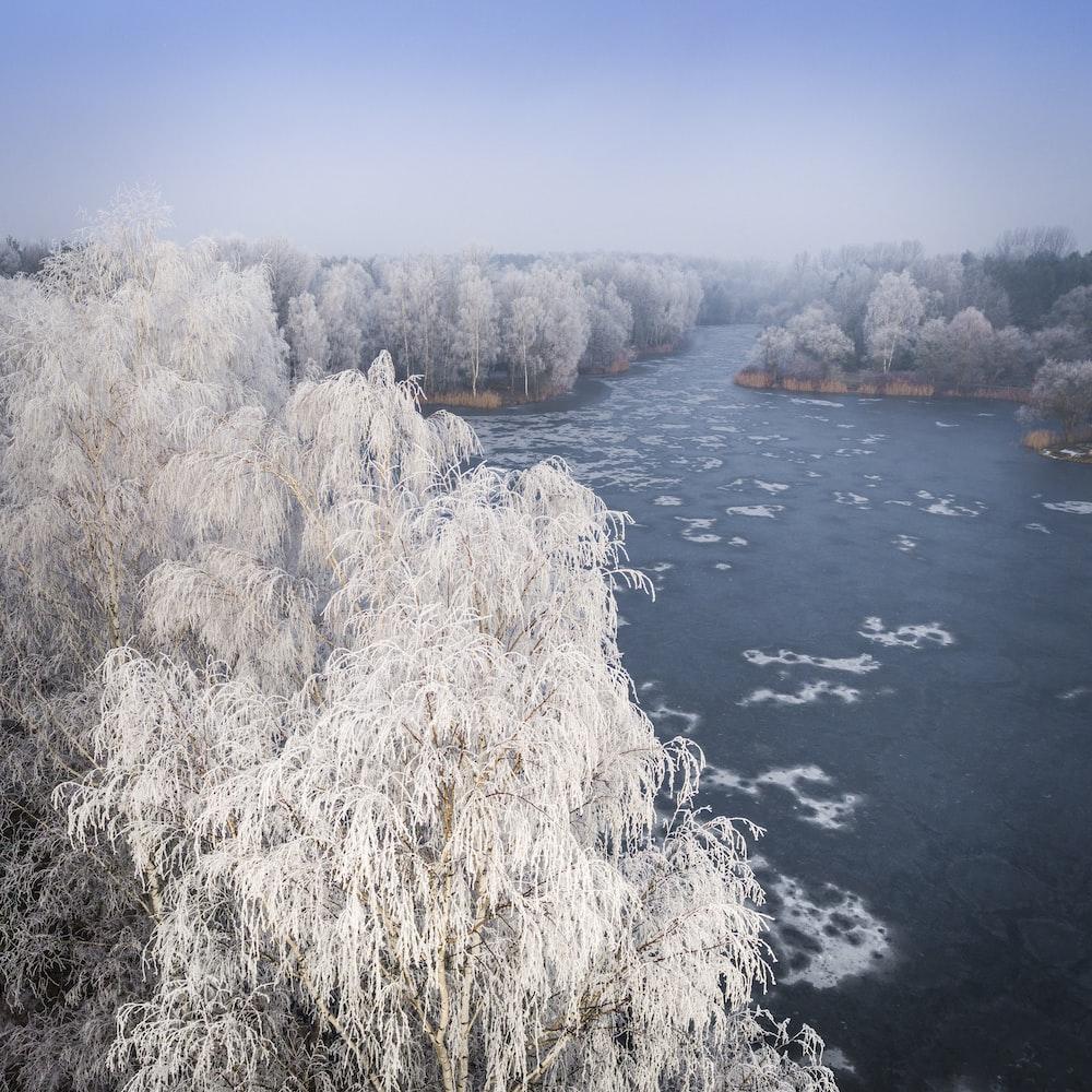 white trees between lake