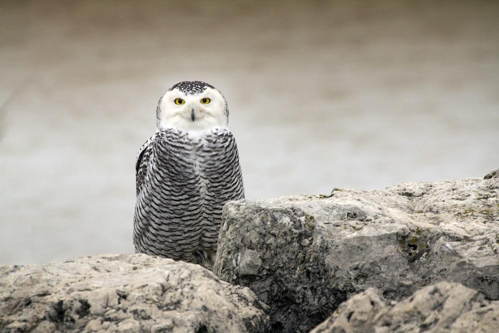 owl on rocks during daytime