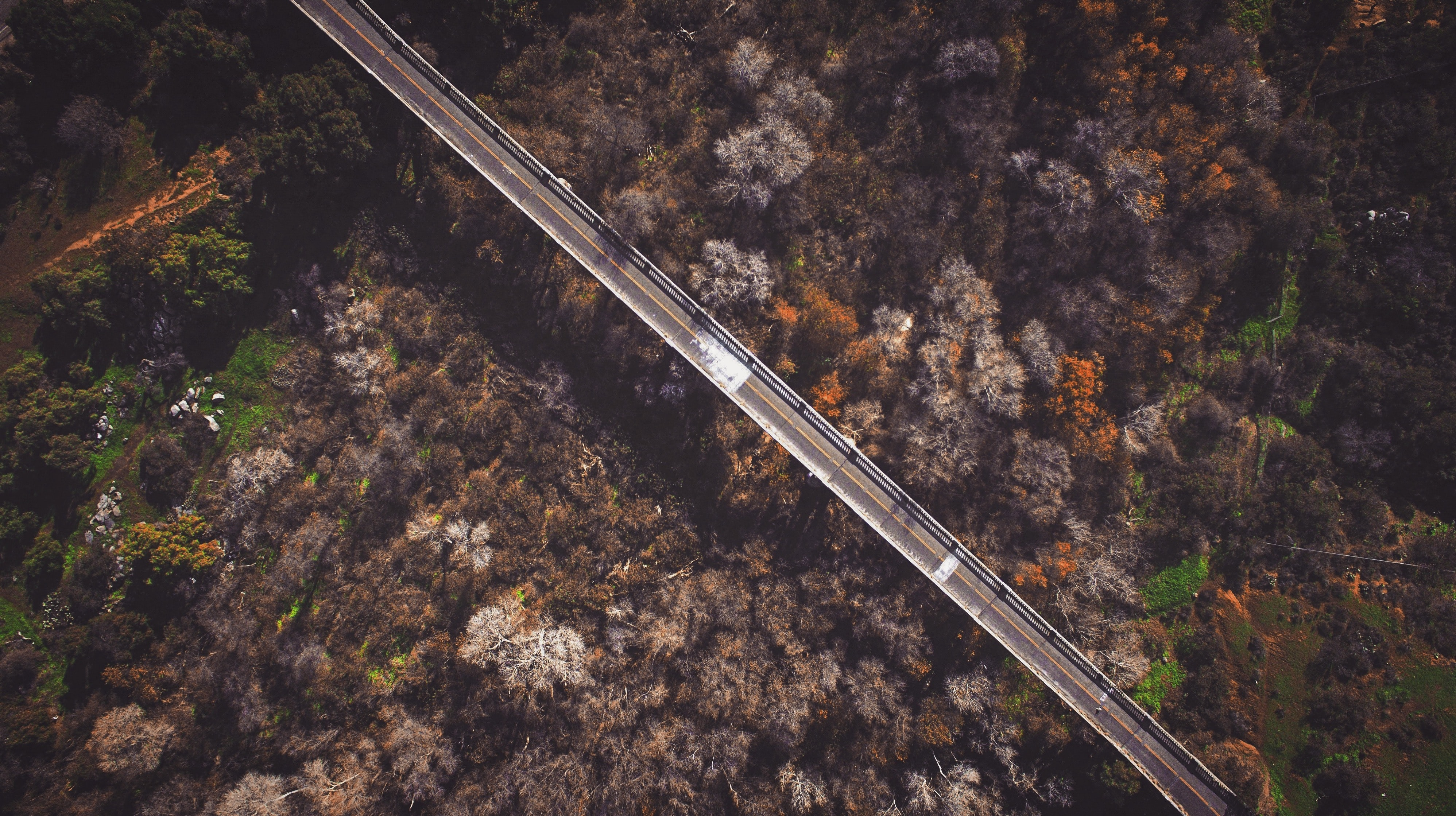 bird's eye view of empty bridge over trees