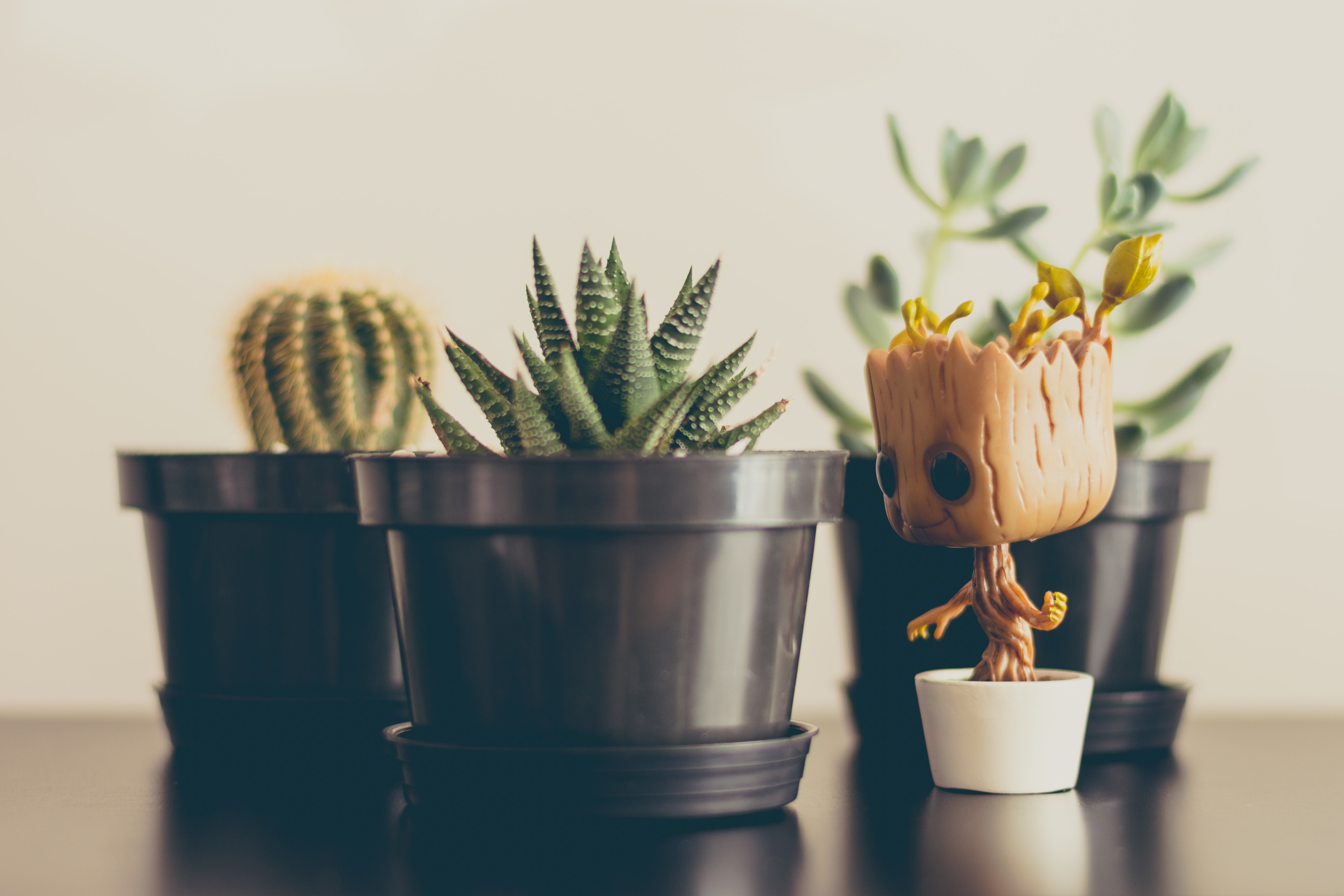 A Great figurine from Guardians of The Galaxy and cactus plants sitting on a desk at Four Work Coworking