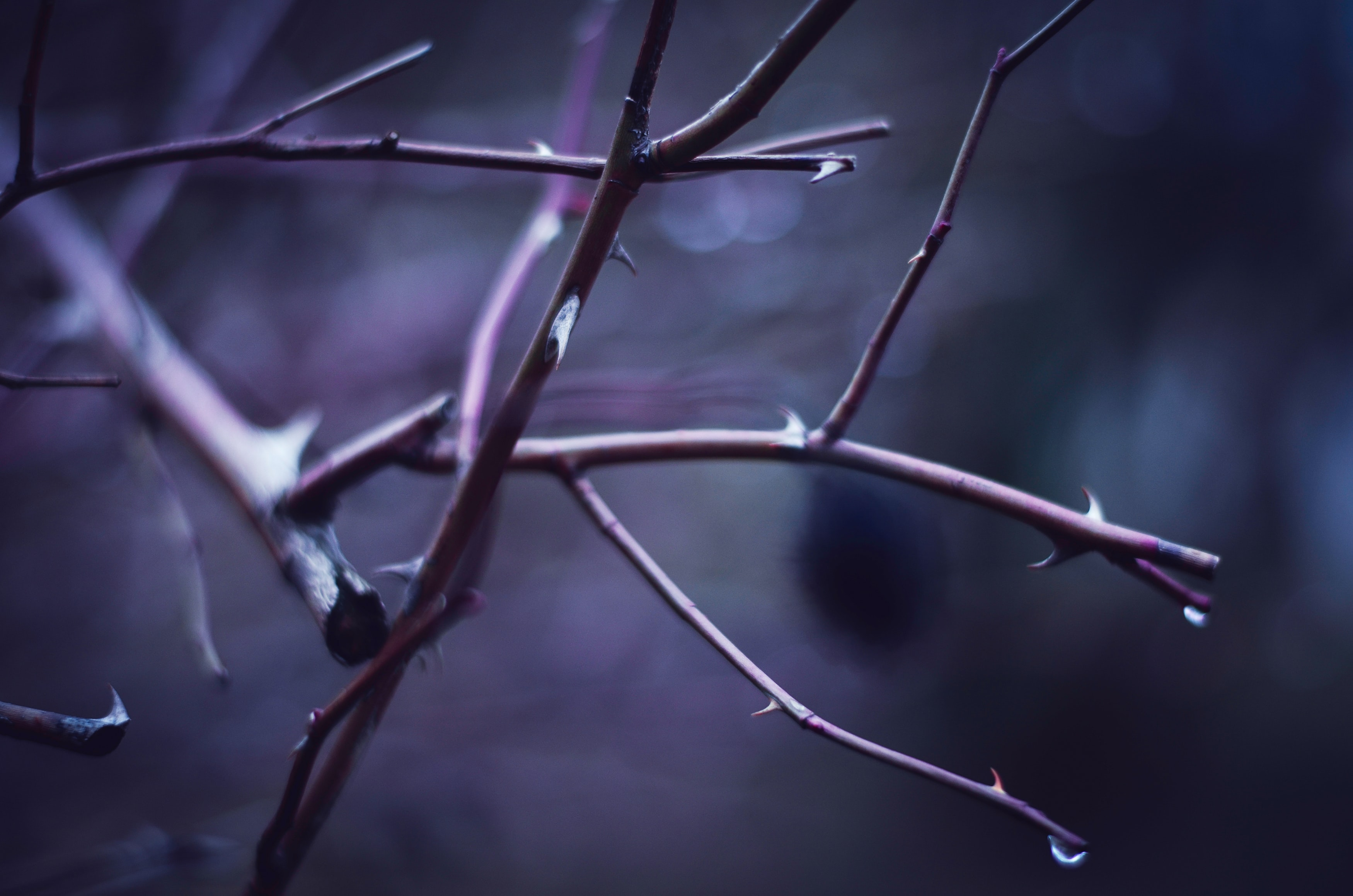 shallow focus photography of tree branch