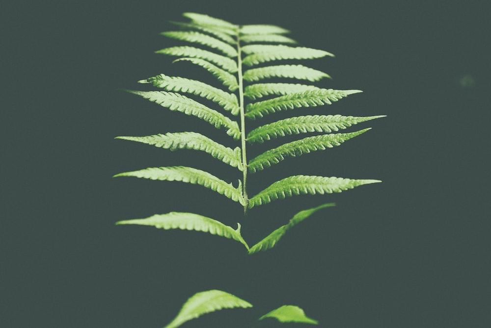 photo of fern leaf