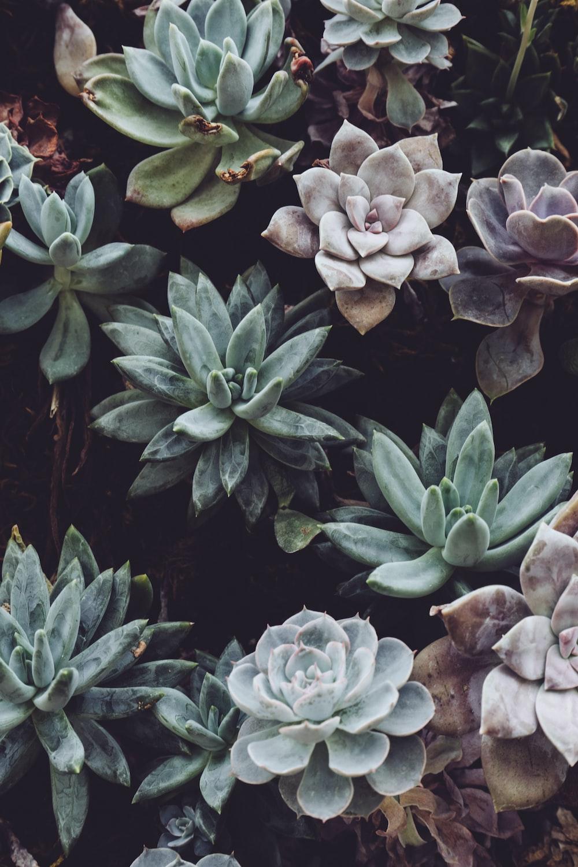 assorted-color succulent plant lot