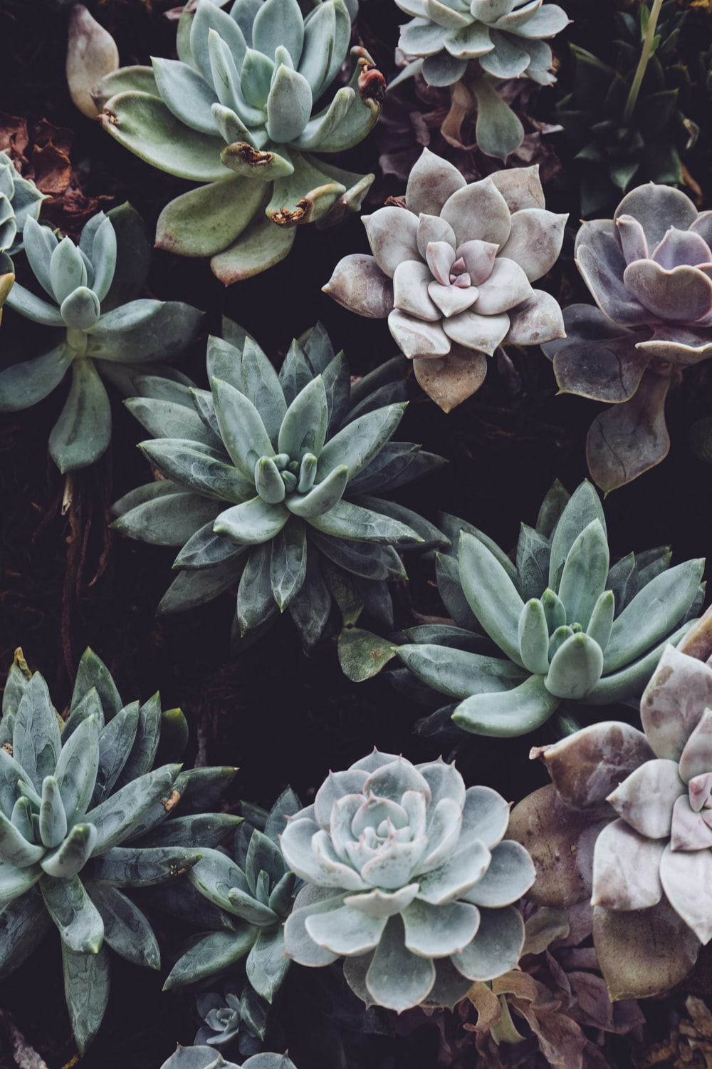 assorted-color succulent plant lot