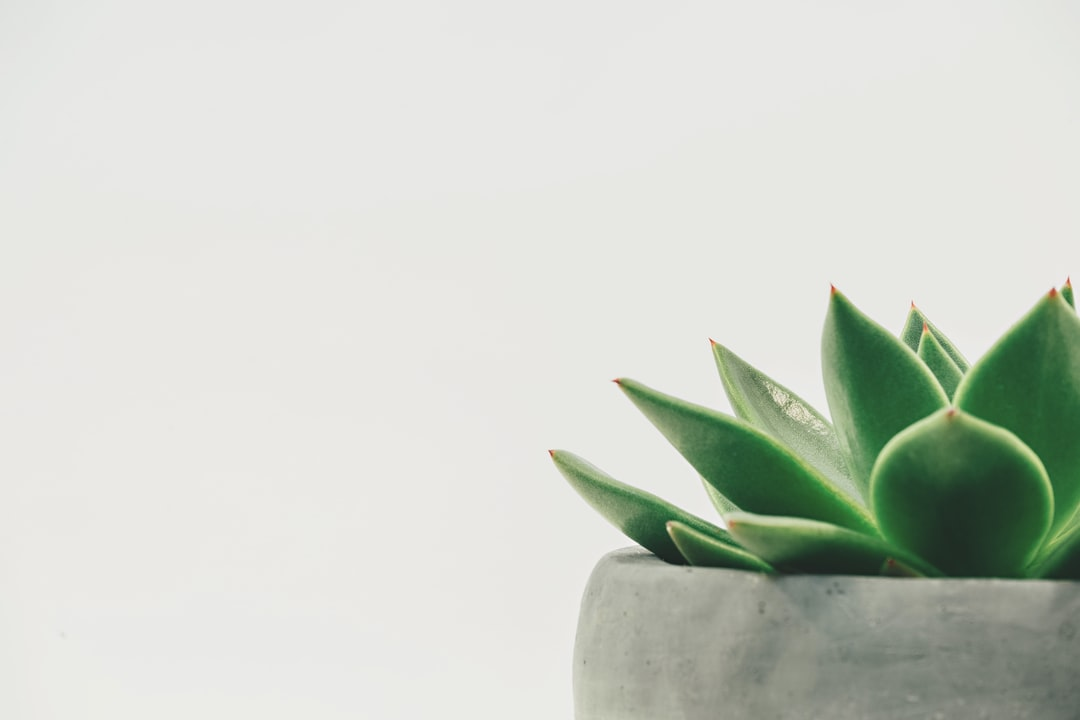 Enjoy a potted succulent in minimalist form.
