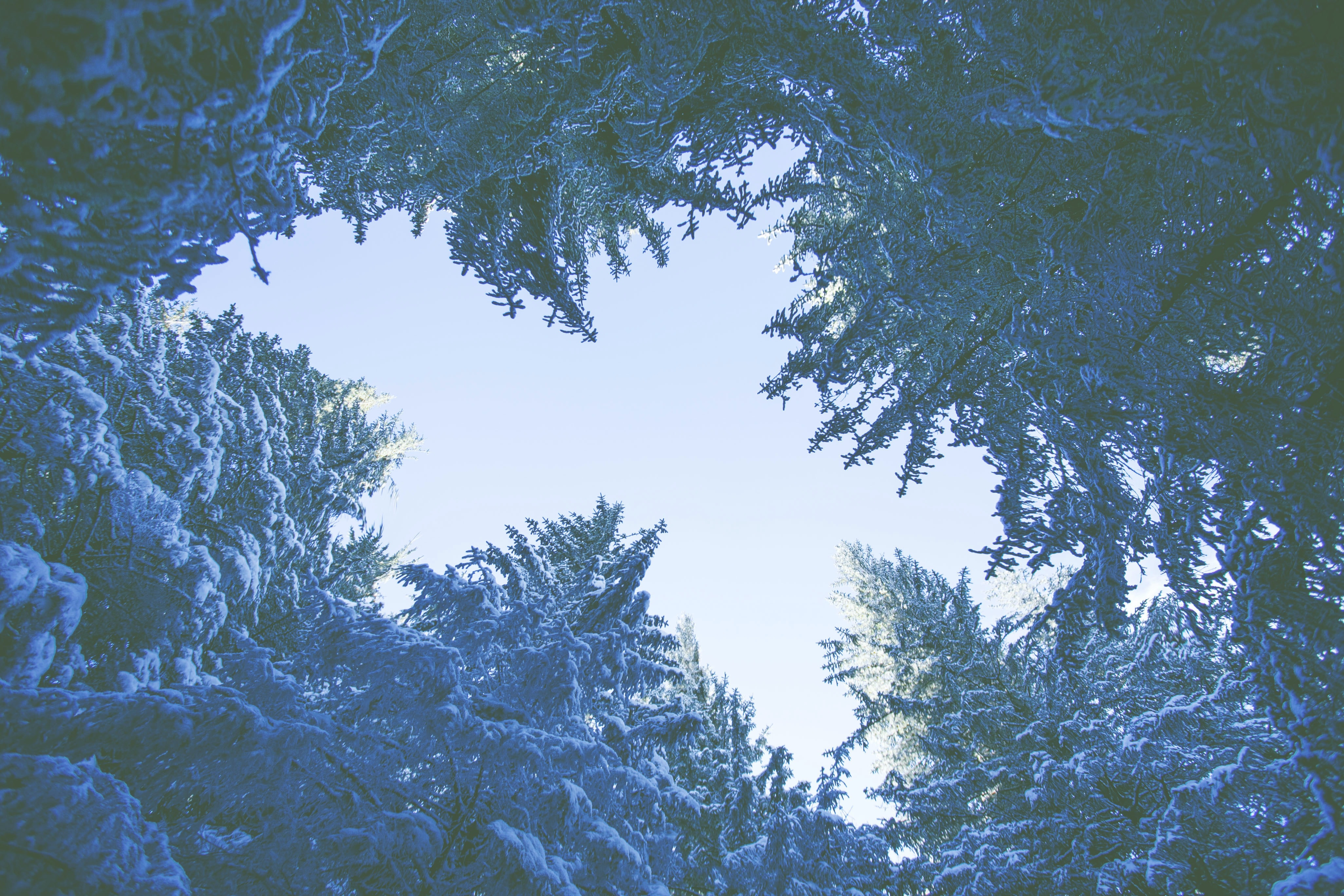 low angle photography of green trees at daytime
