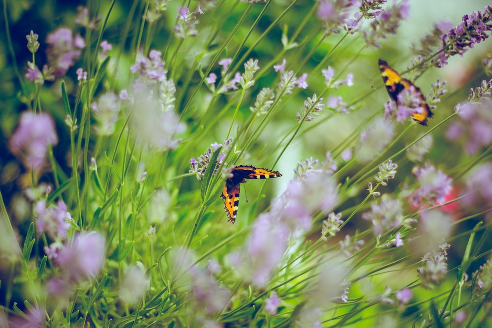 tilt shift photography of butterflies