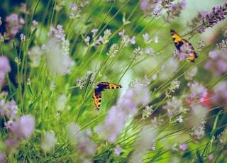 tilt shift photography of butterflies