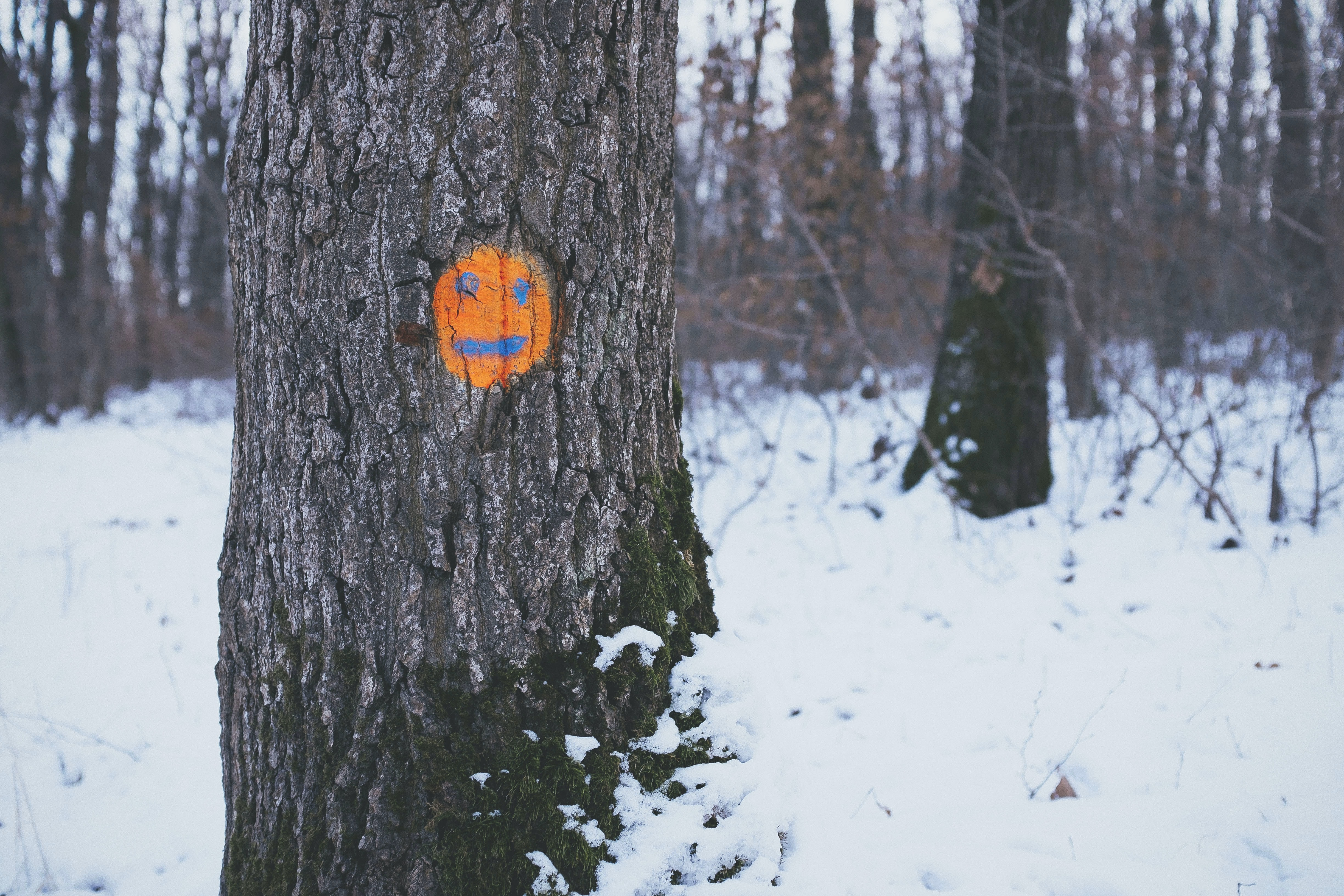 An orange happy face drawn in an old forest tree during the winter in Cluj-Napoca, Romania