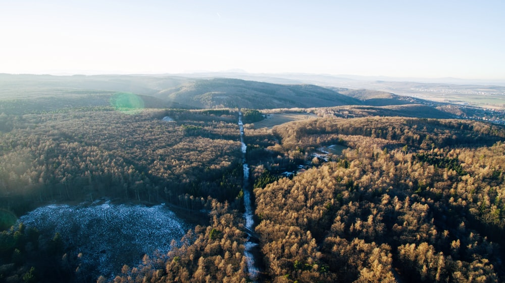 aerial photo of forest under white clouds