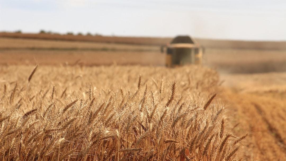 Harvesting the Wheat Crop