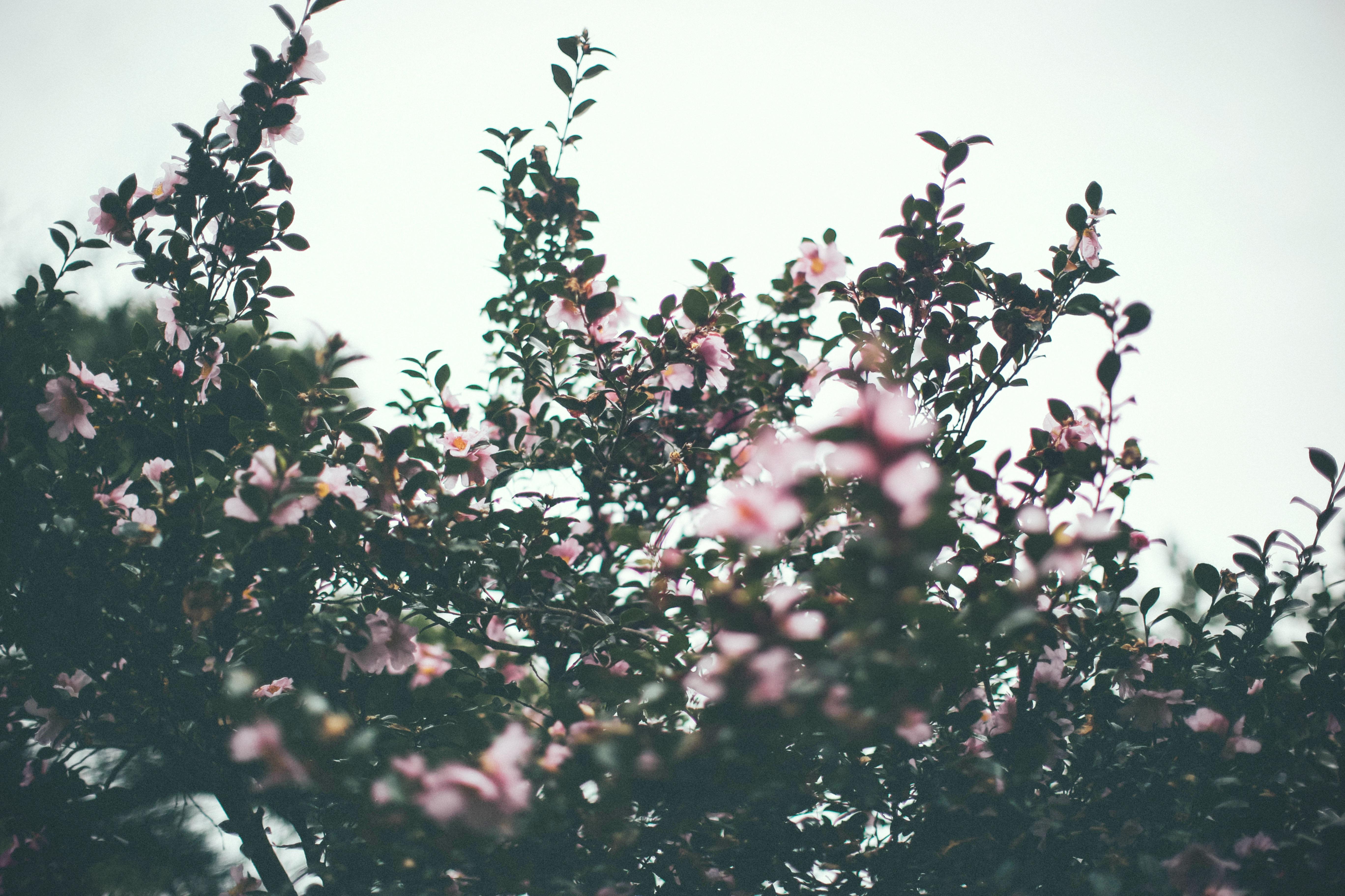 tilt shift lens photography of pink petaled flowers