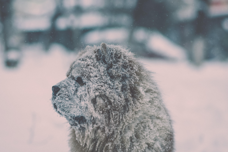 selective photography of gray dog