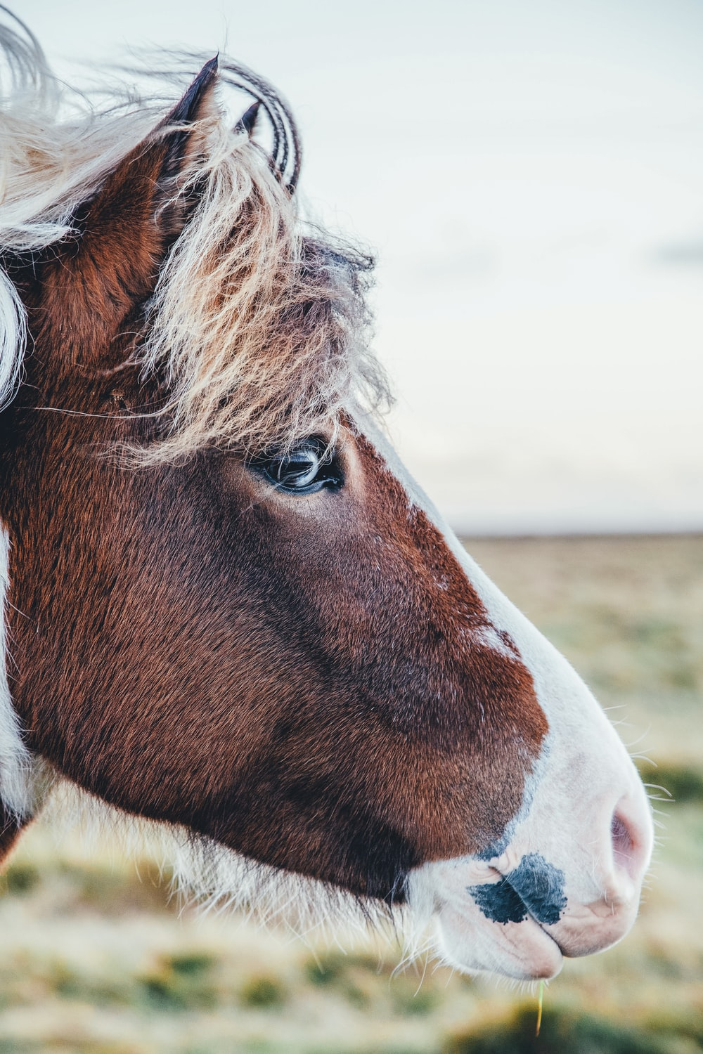 Shallow focus photography of brown and white horse