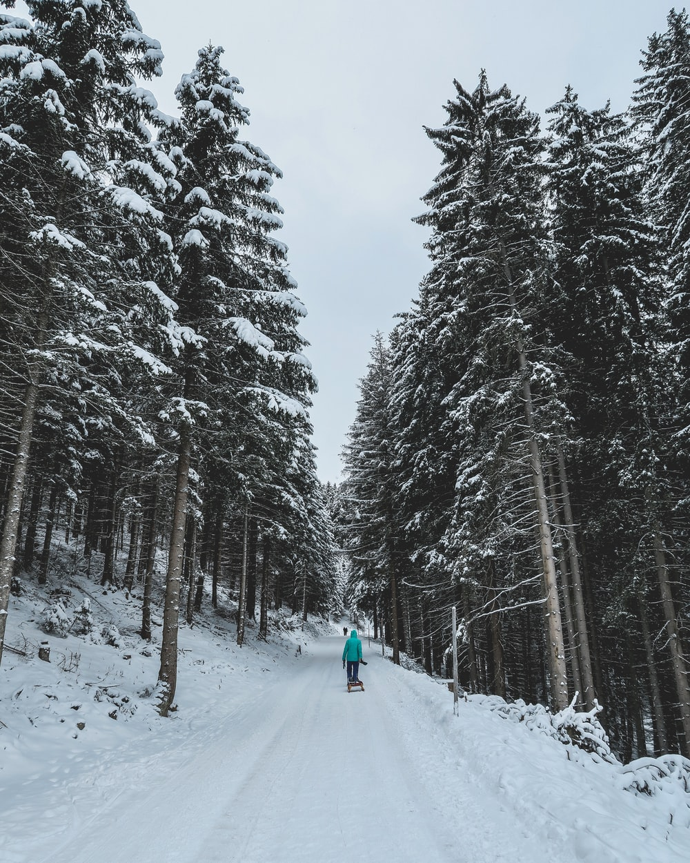 person walking on snowy forest trail