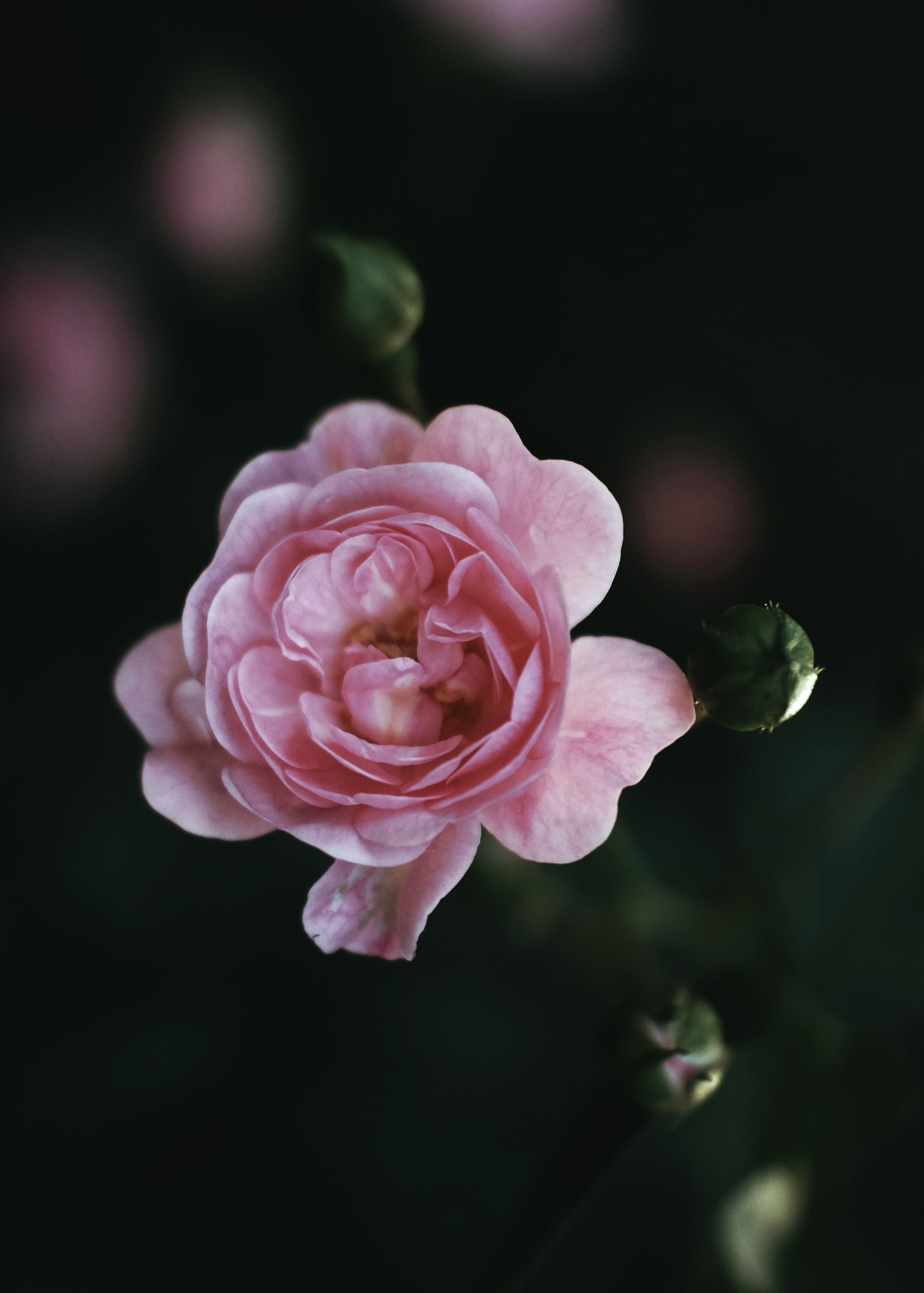 close-up photo of pink petaled flower