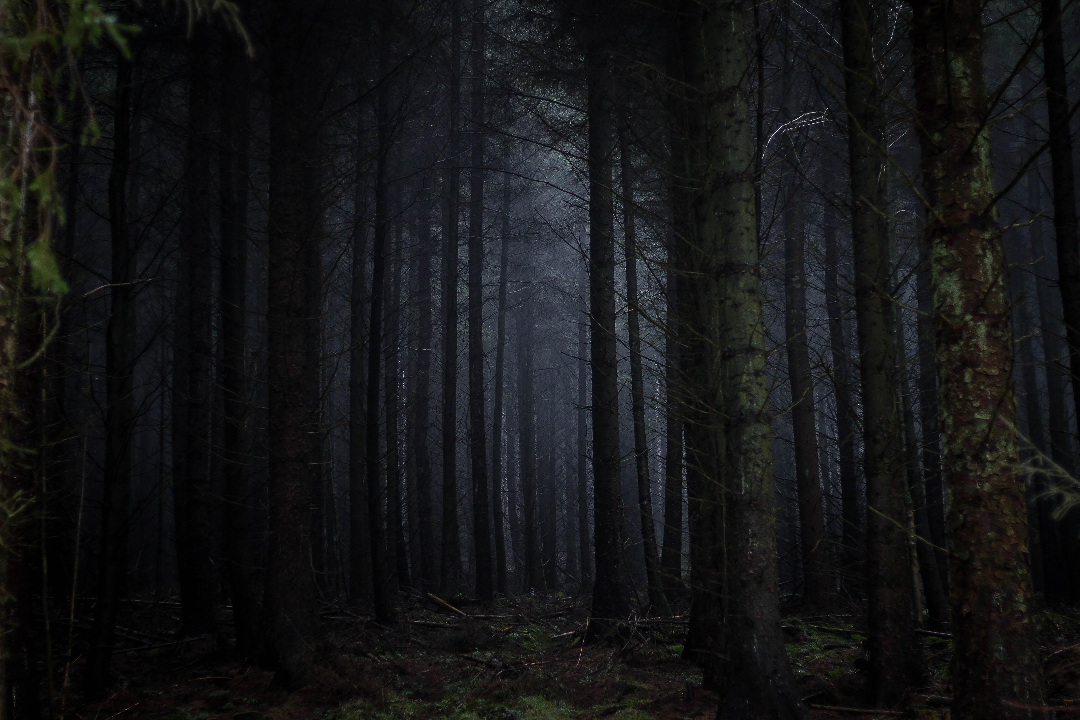 A dark coniferous forest