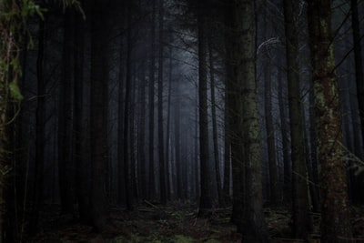 photography of forest spooky teams background