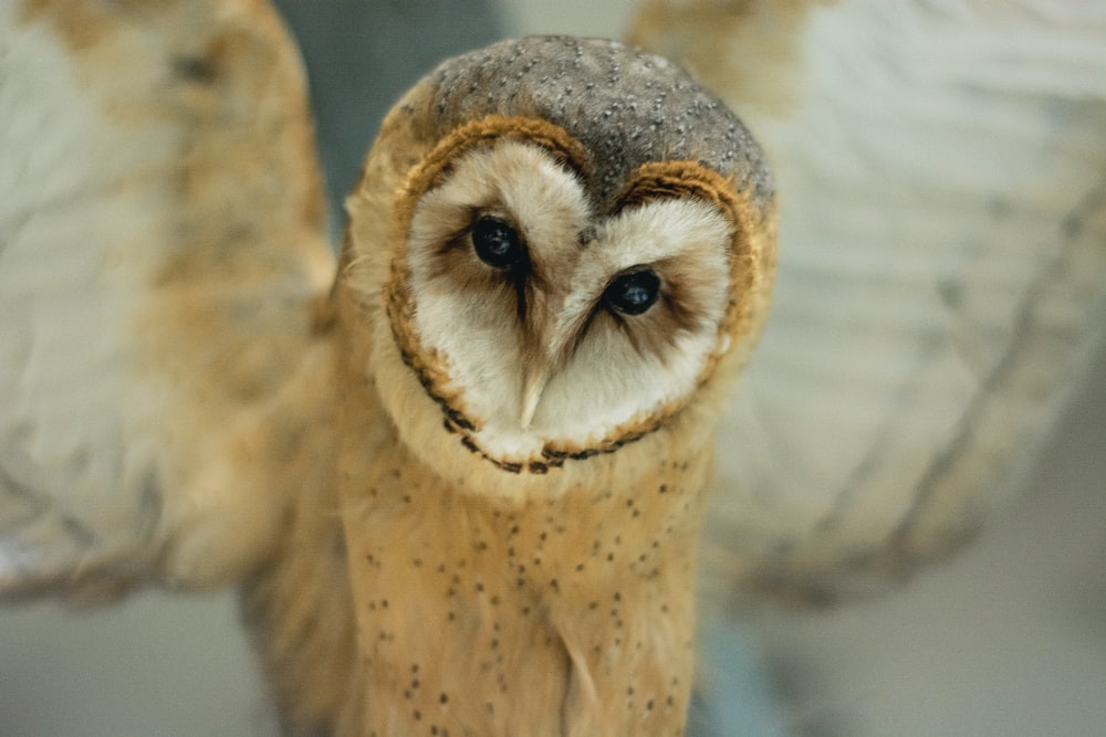 selective focus photography of brown and white owl