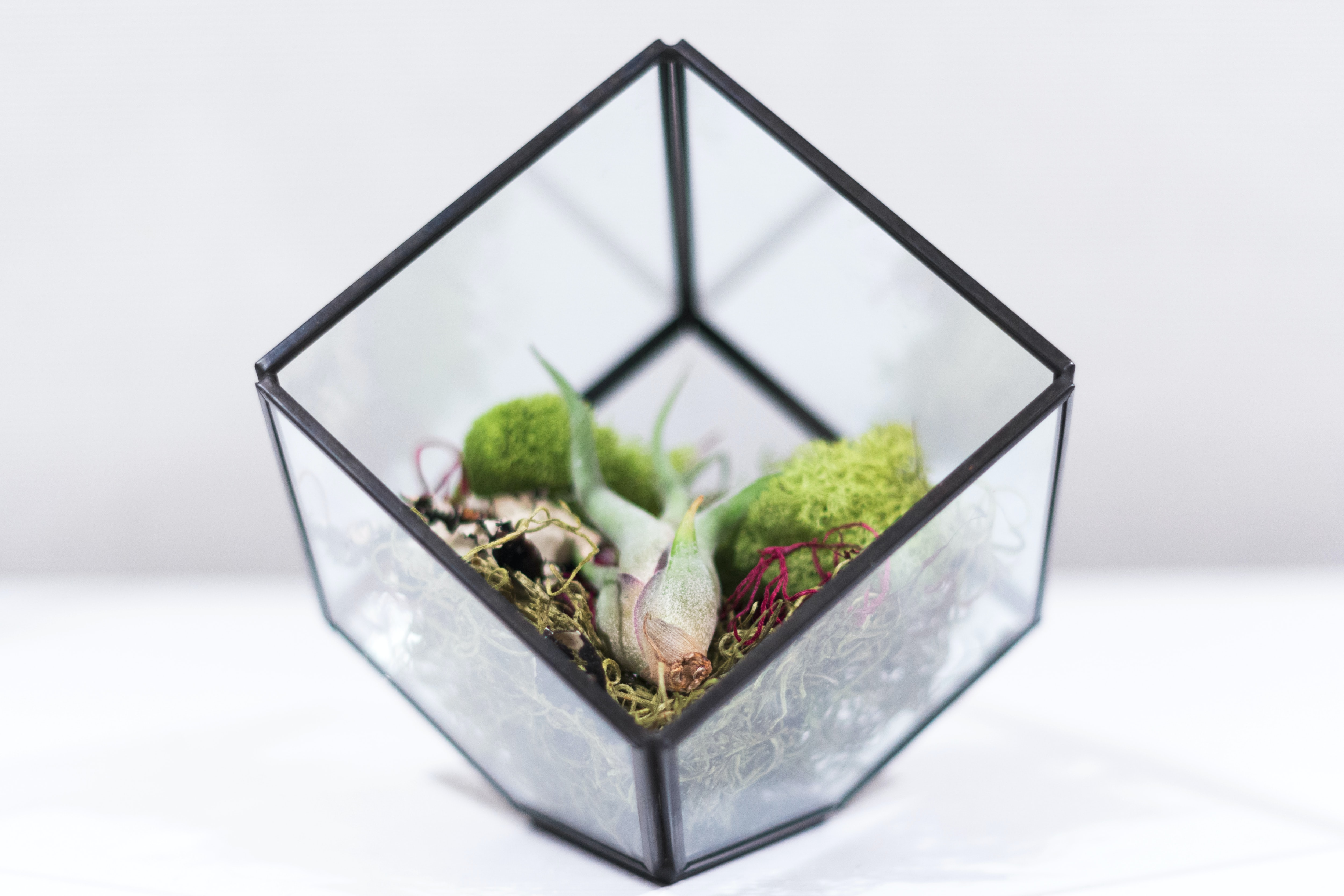 square clear glass terrarium on white surface
