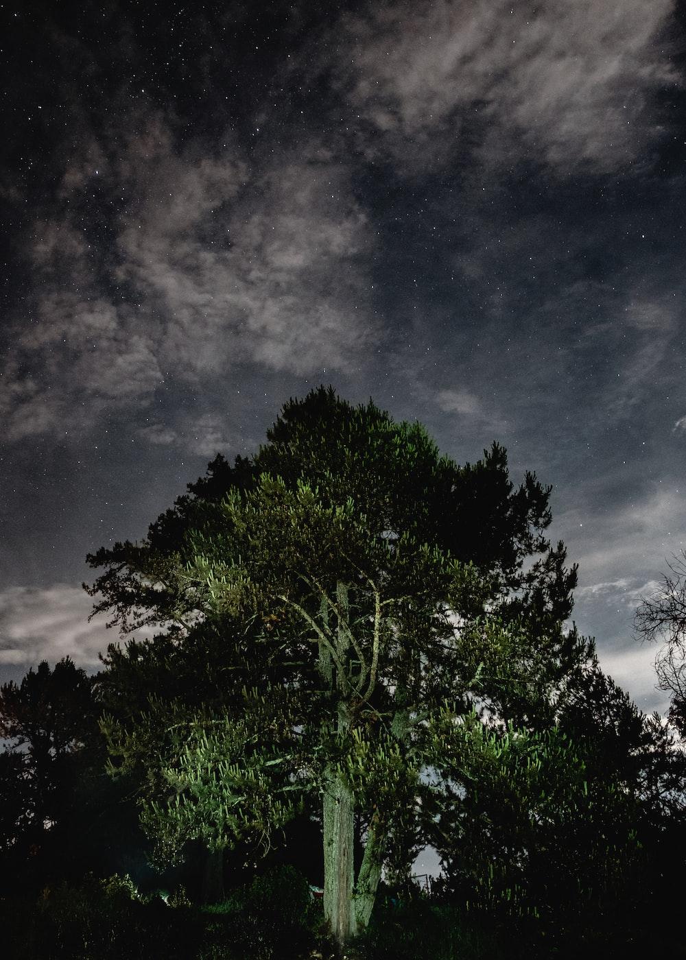 green trees under black sky