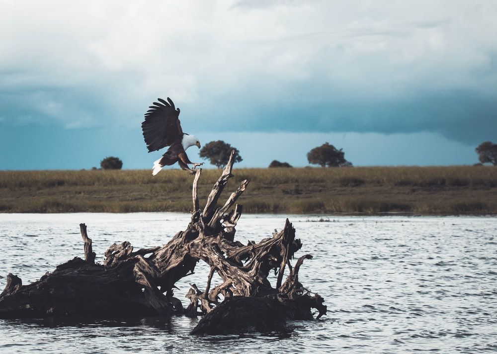 white and black bird on driftwood