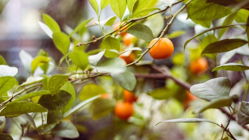 round orange fruit in selective focus photography
