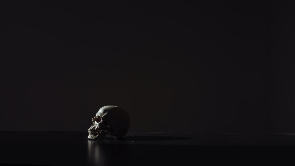900 Skull Background Images Download Hd Backgrounds On Unsplash