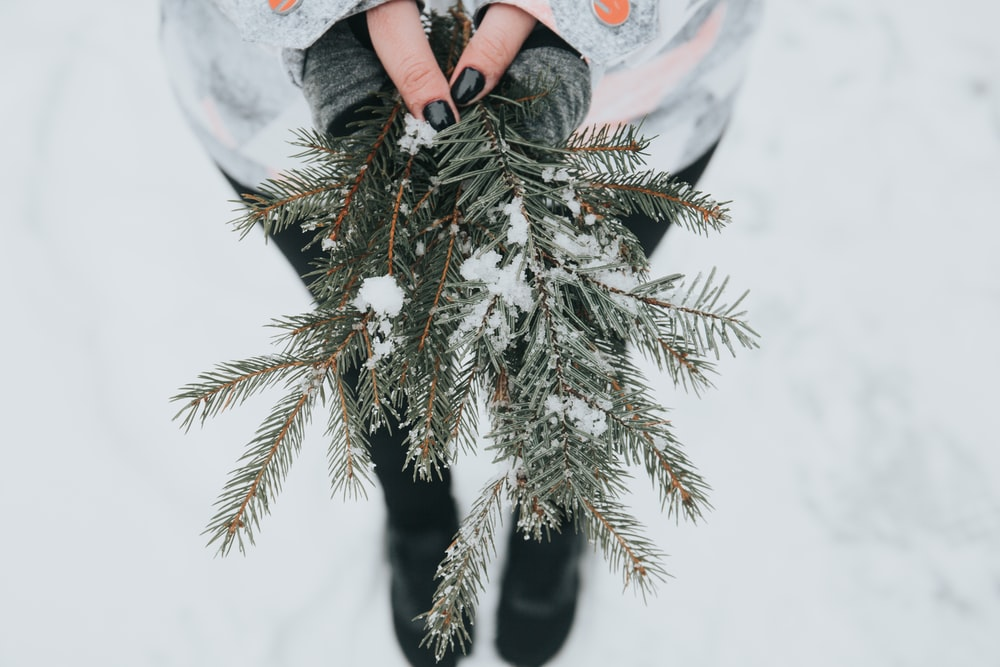 person holding green pine plant with snow