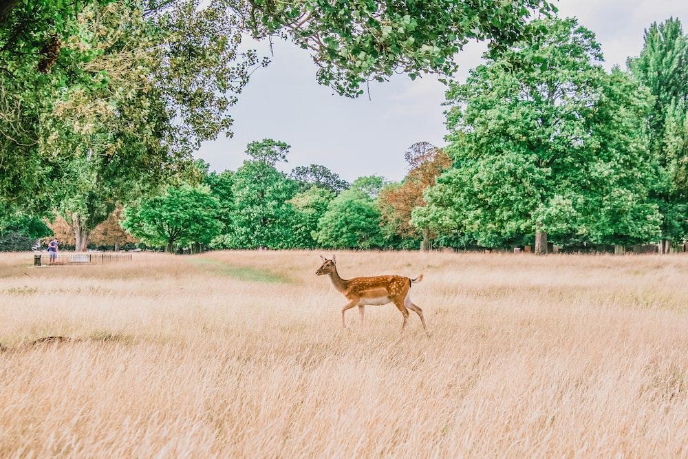 brown deer on grass field