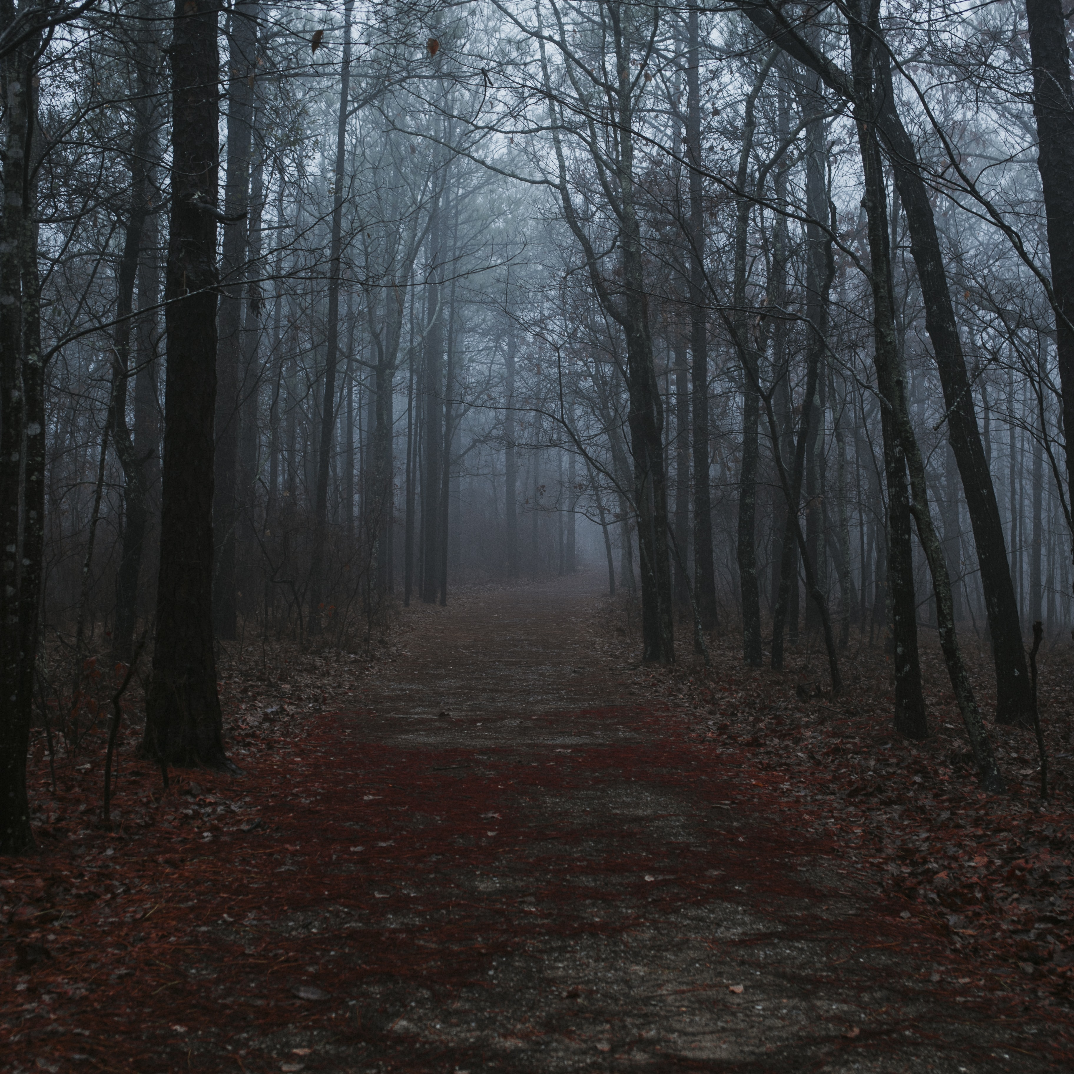 A dark forest walking path.