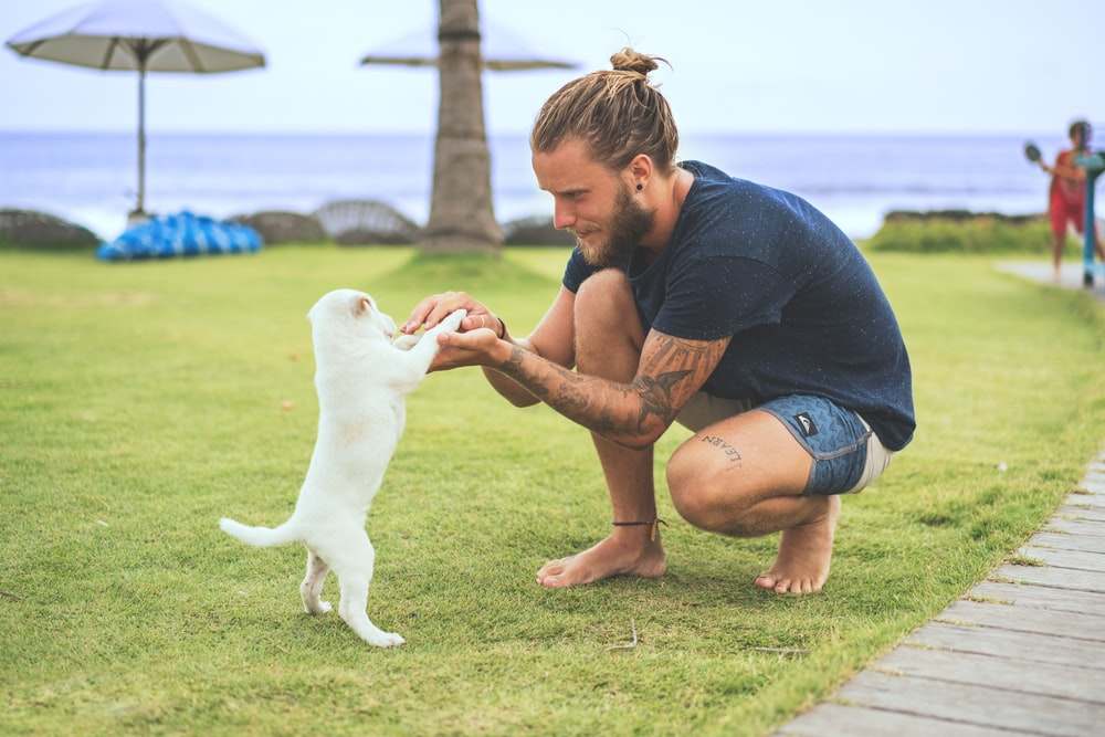 man squatting holding two foot of a white puppy on green sod at daytime