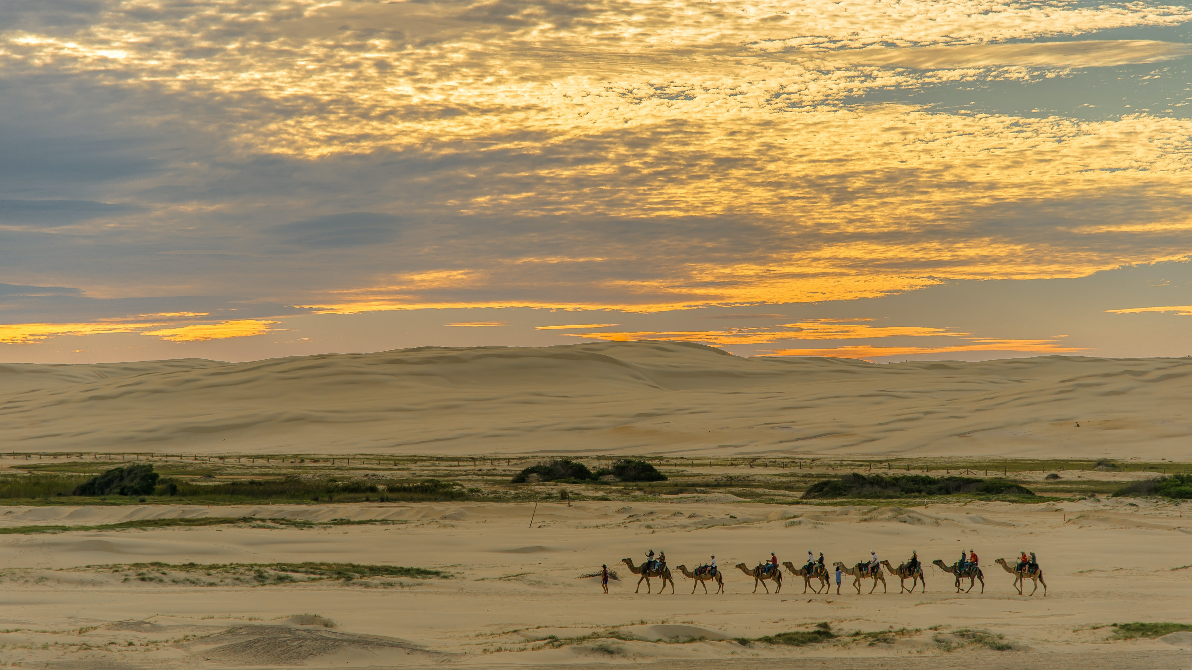 A camel train crosses a desert in convoy as the sun sets against a yellow gold sky.