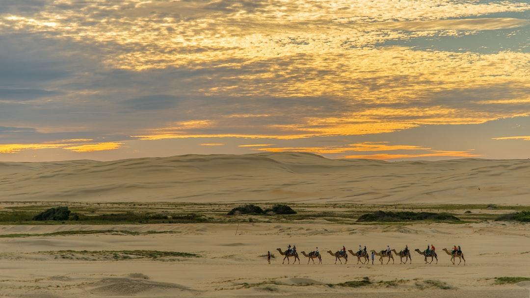 Camel train sunset.