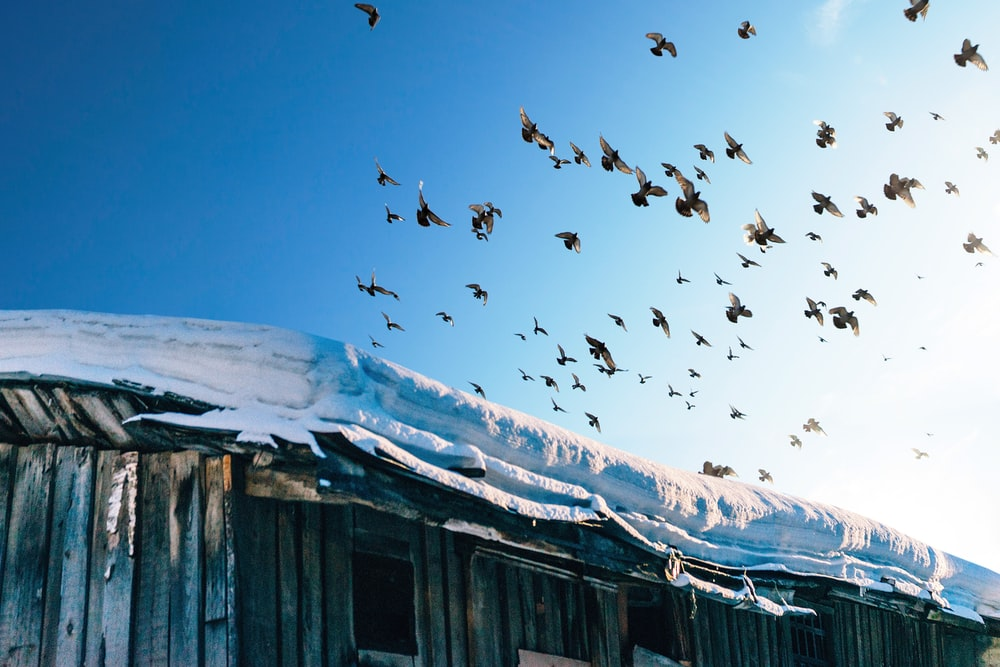 photography of flock of birds