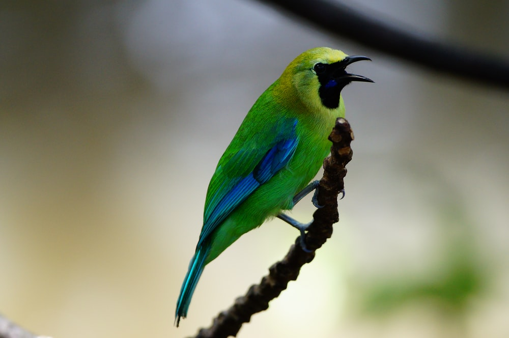 shallow focus photography of green and yellow bird
